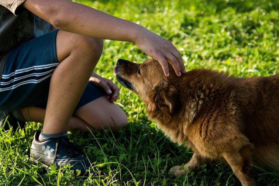 Entendiendo a tu Perro